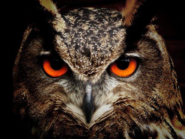 animal-animal-photography-bird-86596