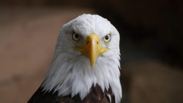 animal-beak-bird-209084