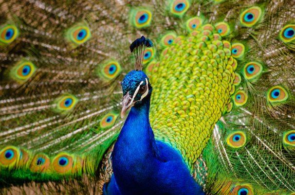animal-bird-feathers-148291