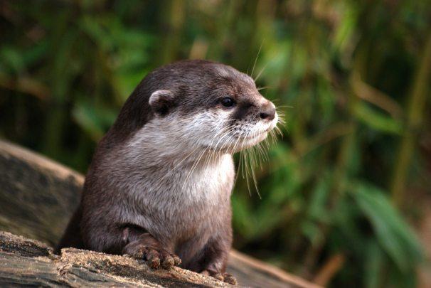 animal-close-up-cute-53510